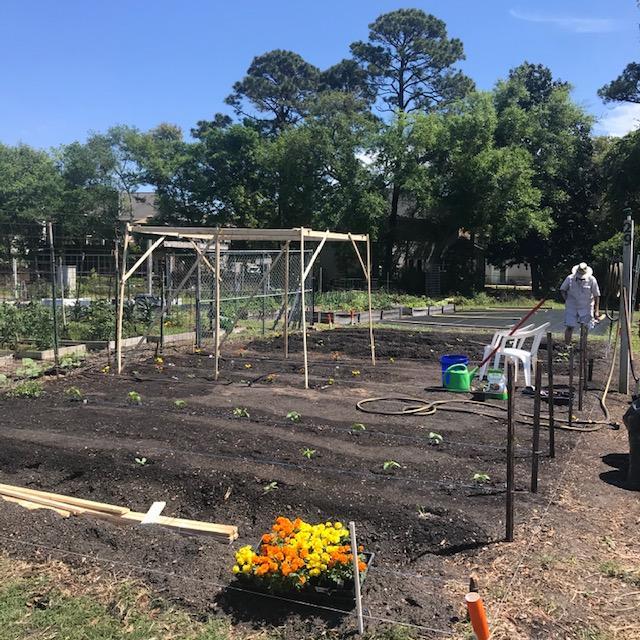 planting - Day 4