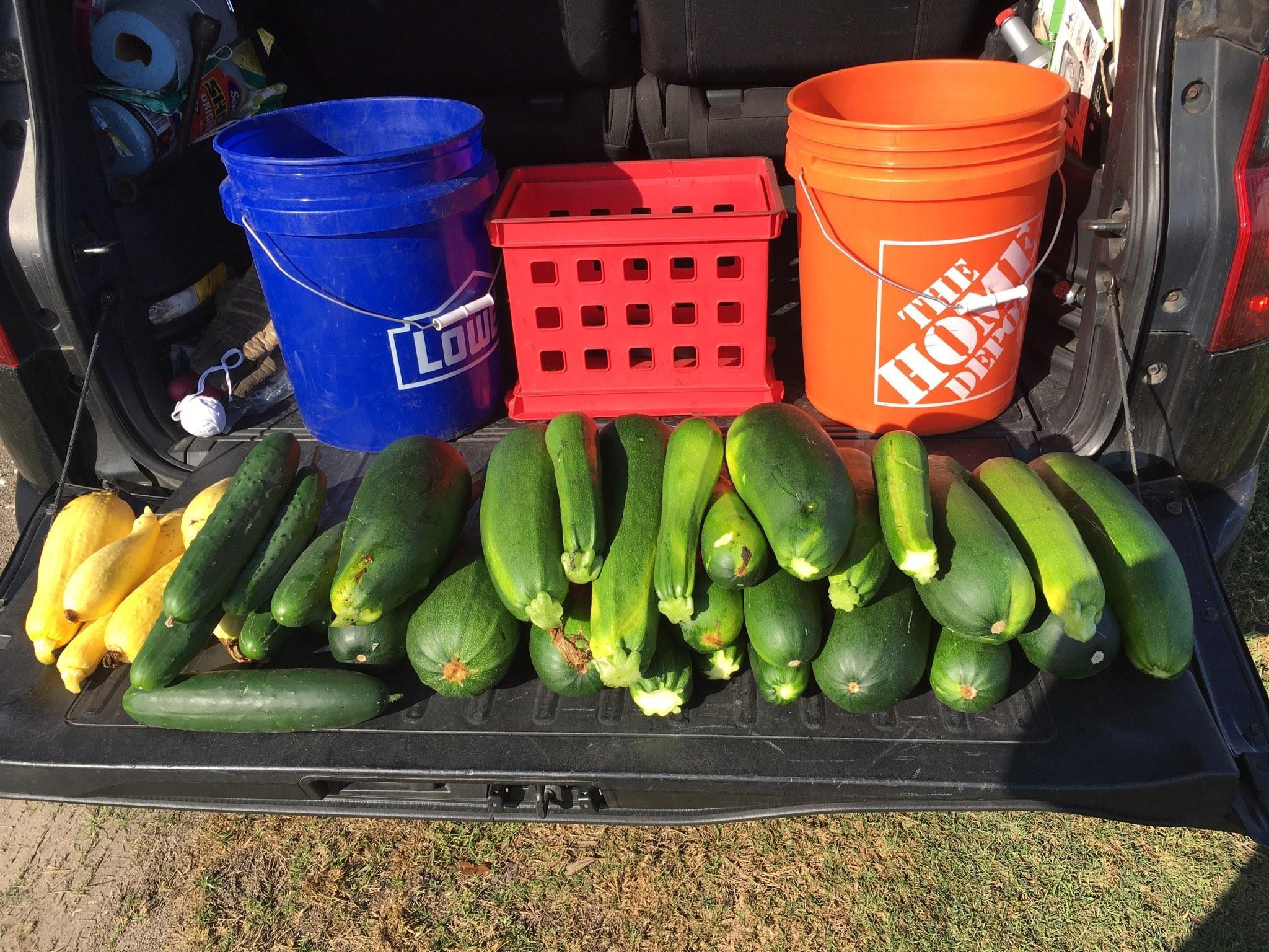 zucchini harvest 5.22.20
