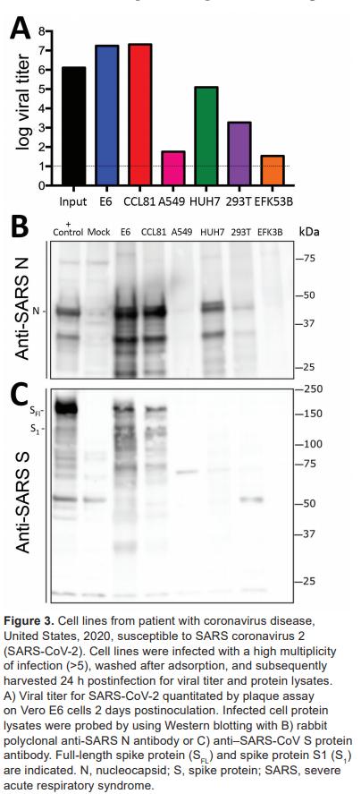SARS-COV cross reactivity with SARS-COV-2